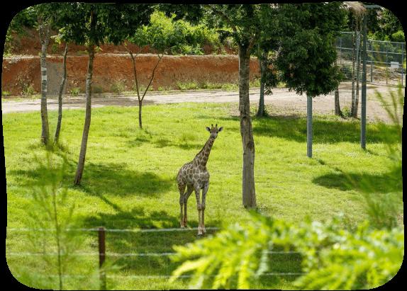 Giraffe-House-4