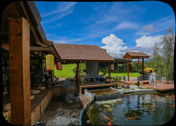 Japanese-Carp-Fish-Pond-2