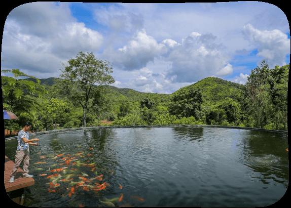 Japanese-Carp-Fish-Pond-3