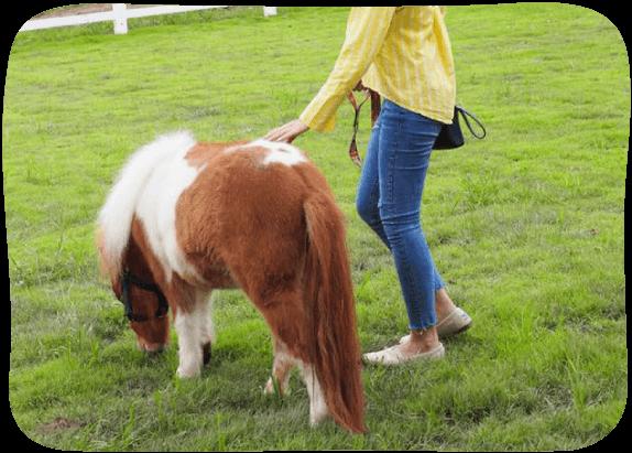 Pony-House-1